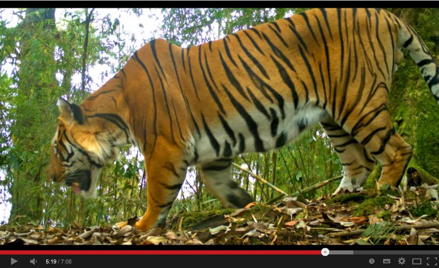 Tiger MPI ASS Standbild 2